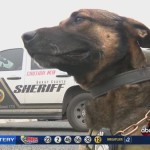 Deputies learn CPR for their K9 Partners